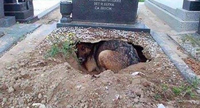Warga Mengira Anjing Ini Berduka Ditinggal Pemiliknya, Saat Dilihat Ternyata Ada yang Disembunyikannya