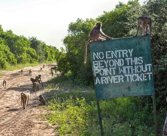 Roteiro de viagem pelo sul da África, incluindo Lesoto, Botswana, Zimbabwe, Zâmbia, Malaui, Moçambique, Suazilândia e África do Sul