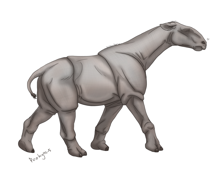 The Glass Character Paraceratherium