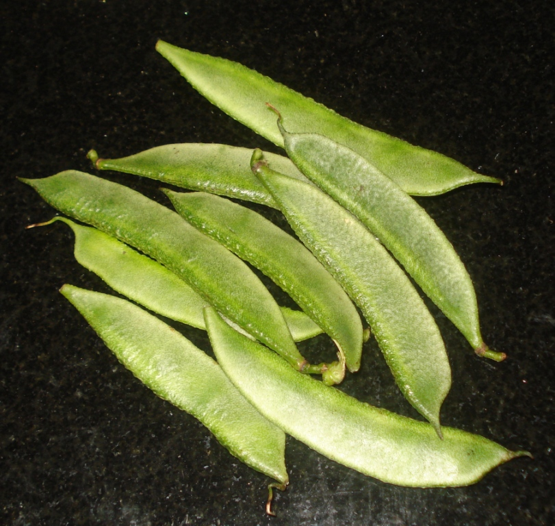 broad beans in tamil