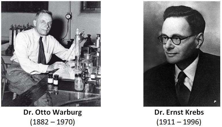 Otto Warburg Ernst Krebs