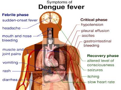 andariki-ayurvedam-dengue-sympotms