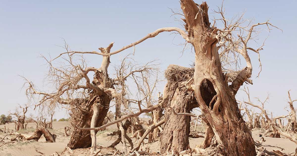 Worsening Droughts