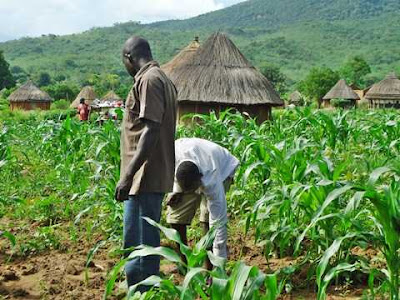 Farming Now a Criteria for University Admission - FG