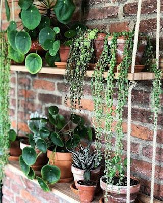 Jakie rośliny wybrać do mieszkania?