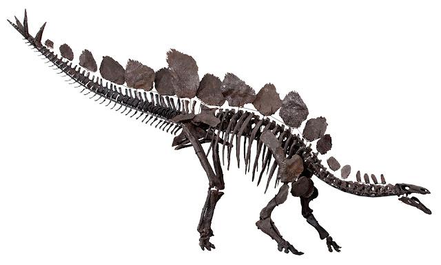 stegozaur schelet