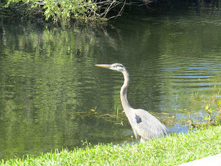 Birding and wildlife view at Shark Valley in the Everglades National Park