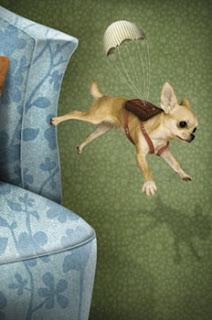 cães pulando