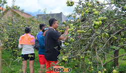 Agrowisata di Dewa Wisata Gubugklakah