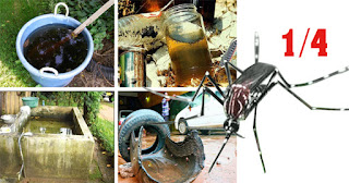 Risk of mosquito breeding found one in every four houses inspected during dengue control week