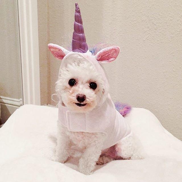 perro halloween