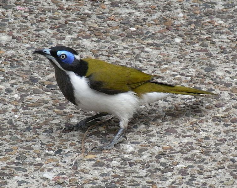 Rocks in her head: My Top Tropical Australian Birds