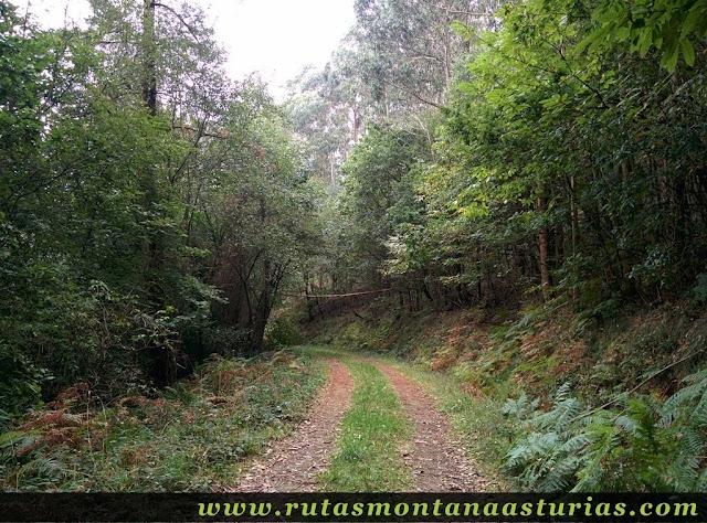 Ruta Das Minas PR AS-182: Bosque