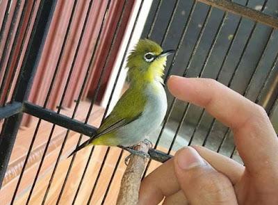 kicaumaster89.blogspot.com