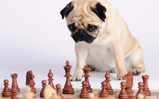 Pug-playing-chess