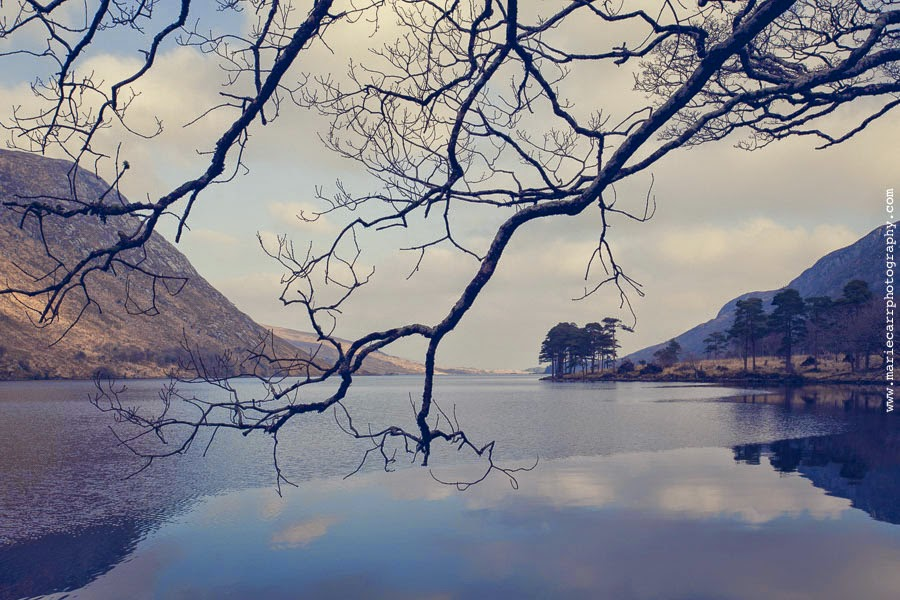 Scenic view of Lough Veagh framed by the branches of a tree in Glenveagh, Country Donegal