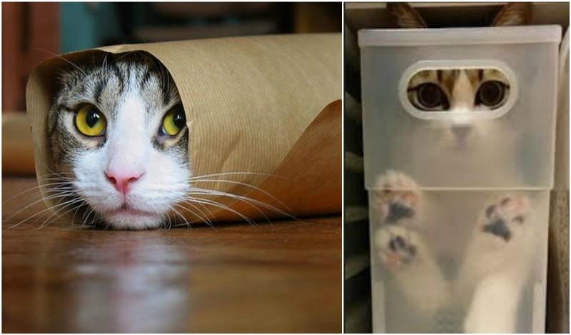 57e06005fe65 Γιατί η γάτα μου τρυπώνει σε απίθανα μέρη  (βίντεο)