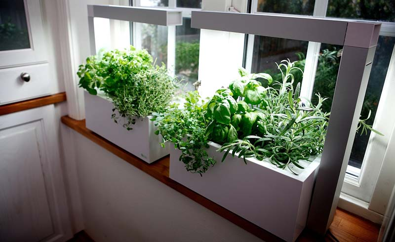 Indoor herb garden, indoor herb garden kit, indoor herb garden ideas, indoor wall herb garden, hanging indoor herb garden, indoor kitchen herb garden, indoor garden, indoor garden kit