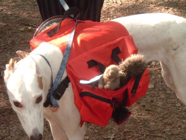 Rescue greyhound