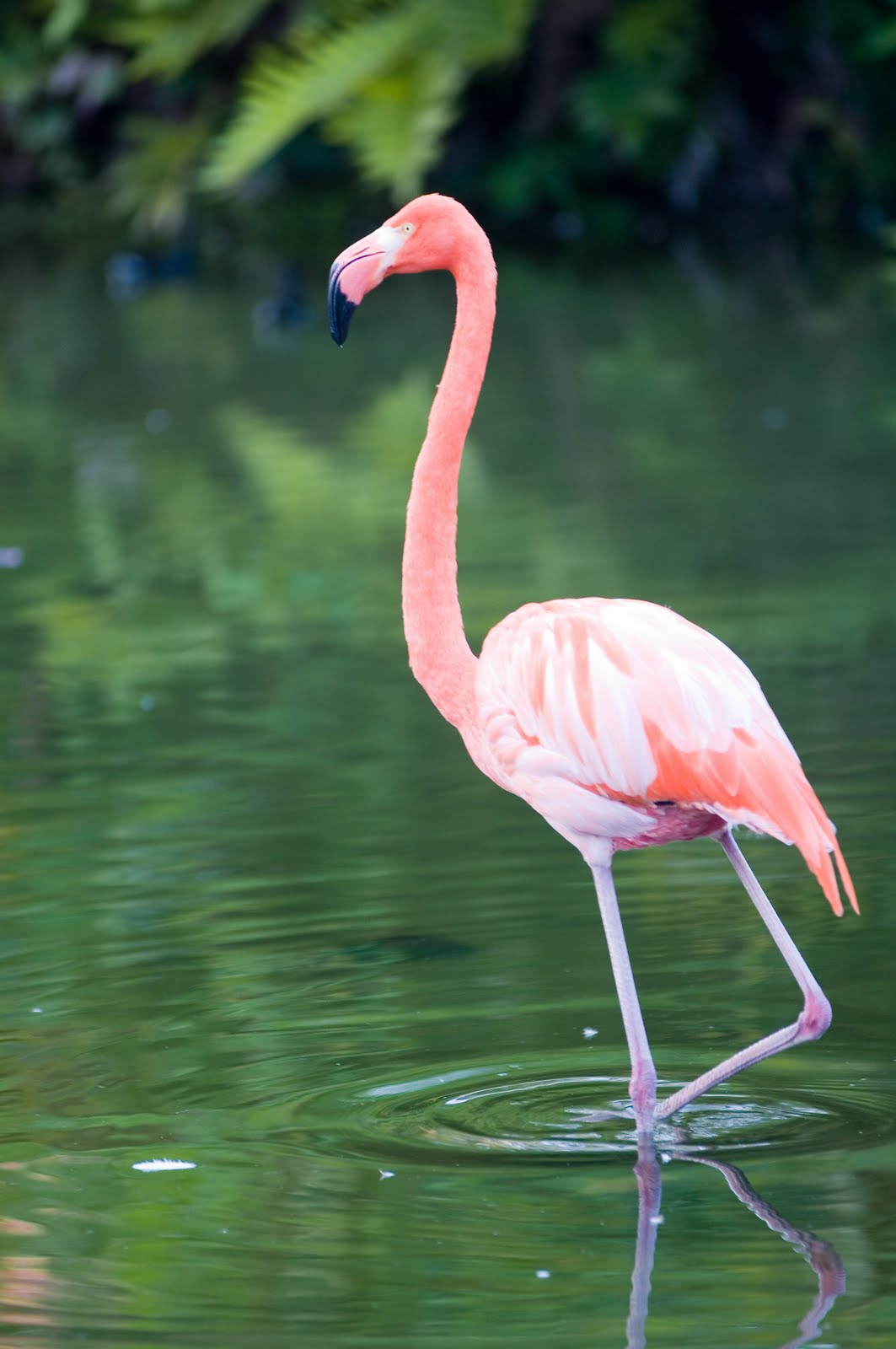 AWIE OMAR Burung Siri 1
