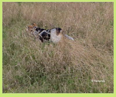 Tierisches, Emma und Lotte, Blog über Hunde