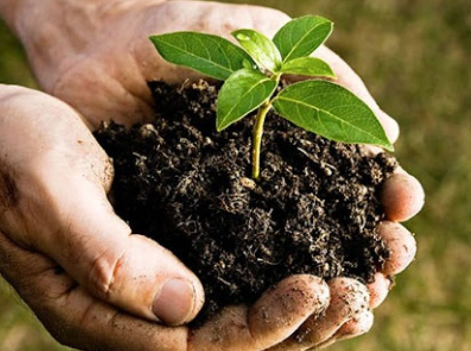Bio Organic Fertilizer Production In Agriculture For Plants