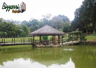Construção de lagos com muros de pedra com a ponte de madeira com a execução do quiosque de piaçava.