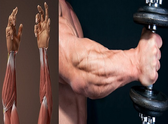 4 tips and exercoses to build big forearms
