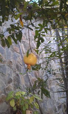 granada en el arbol