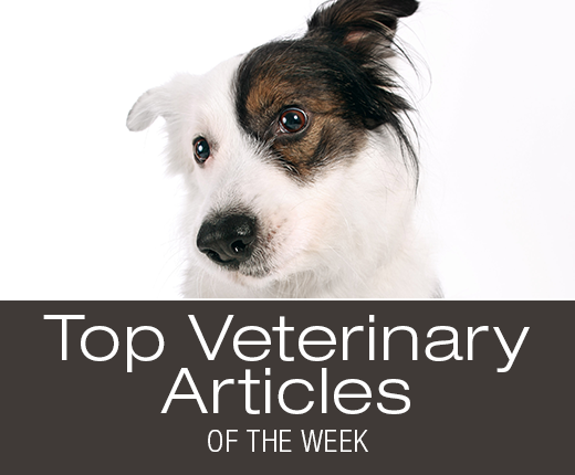 Top Veterinary Articles of the Week: Dog Safety, Otitis, Hearing Loss, and more ...