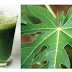 Benefits of Papaya Leaf for Health
