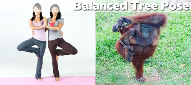 Funny Cool Pictures: Even Animals Can Do Yoga