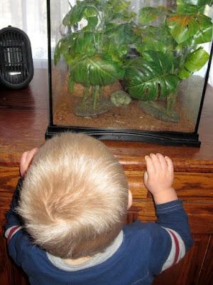 Reasons Never To Take The Class Pet Home on Vacation -- In my zeal to be the world's best mom, I volunteered to take home my son's class frog for the holiday. Before long, I realized I'd made a terrible mistake.  {posted @ Unremarkable Files}