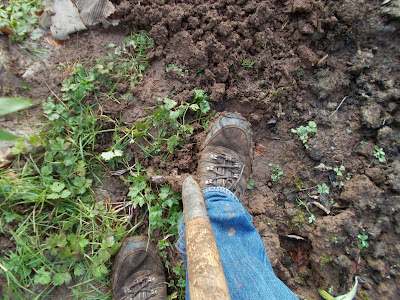 Using a garden fork to get under weeds 80 Minute Allotment Green Fingered Blog