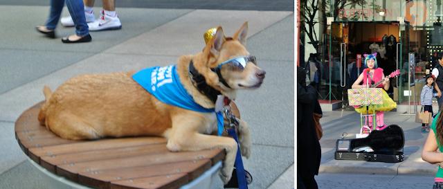 third street promenade santa monica dog with glasses
