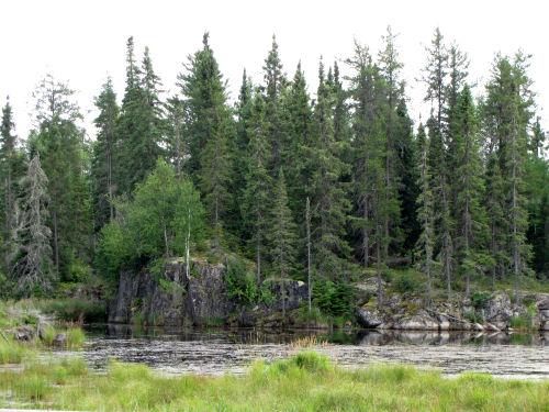 rocky wetland