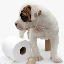 Remedios contra el estreñimiento en los perros
