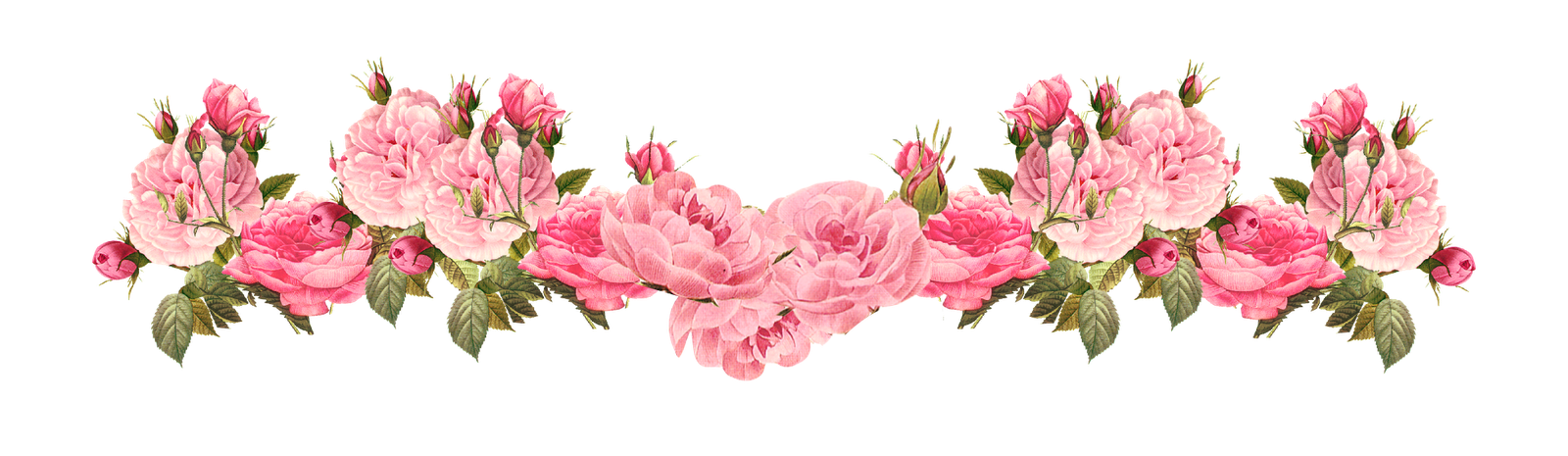 roses dividers clip art - photo #30