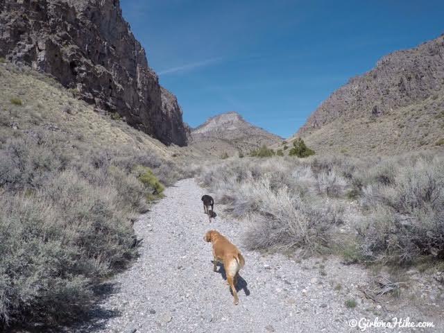 Where Can I Turn In A Dog In Utah