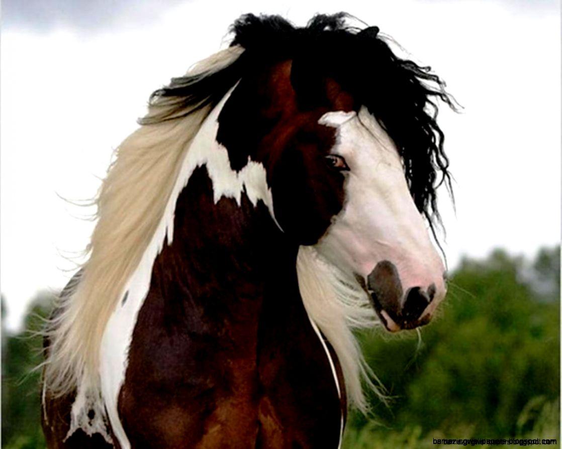 Wild Paint Horse Wallpaper | Amazing Wallpapers