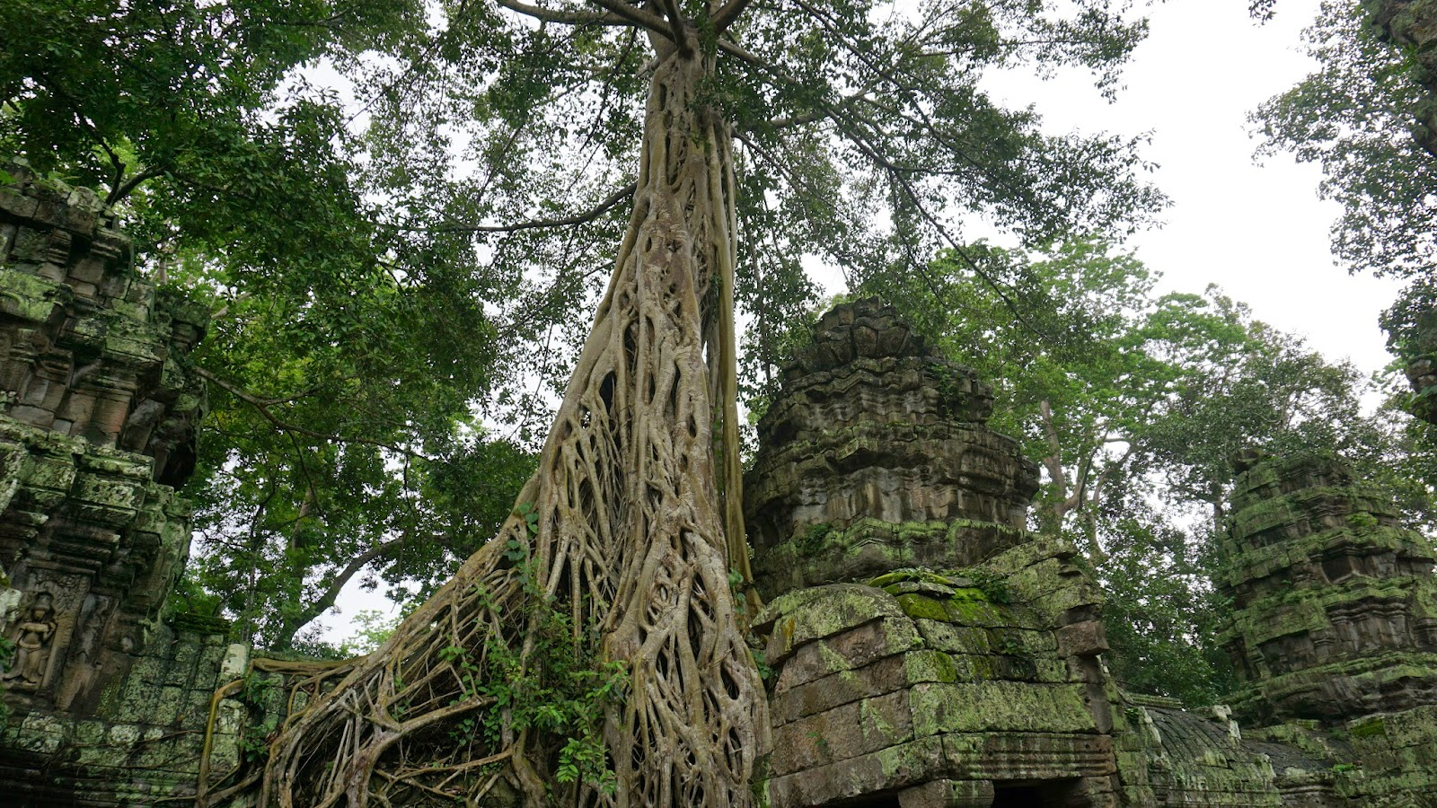 Trees growing out of the ruins are Ta Prohm's biggest attraction