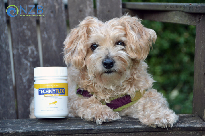 Ruby tries New Zealand's Best Technyflex Canine Joint Formula with 100% Green-lipped mussel