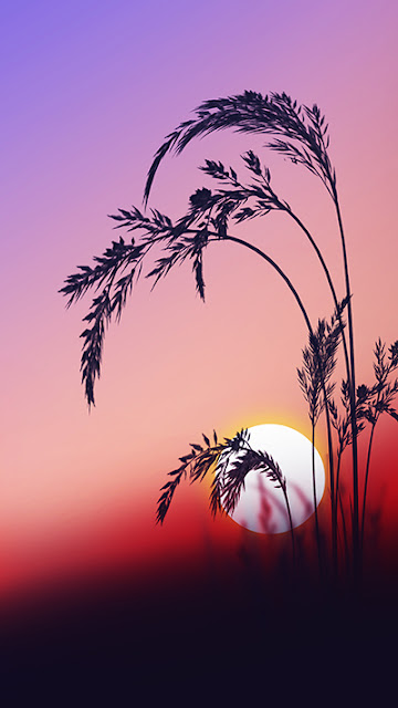 Sunrise Wallpapers Zenfone 3 Deluxe