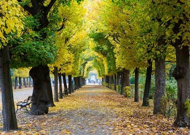 Traveling to Vienna in Austria during Autumn