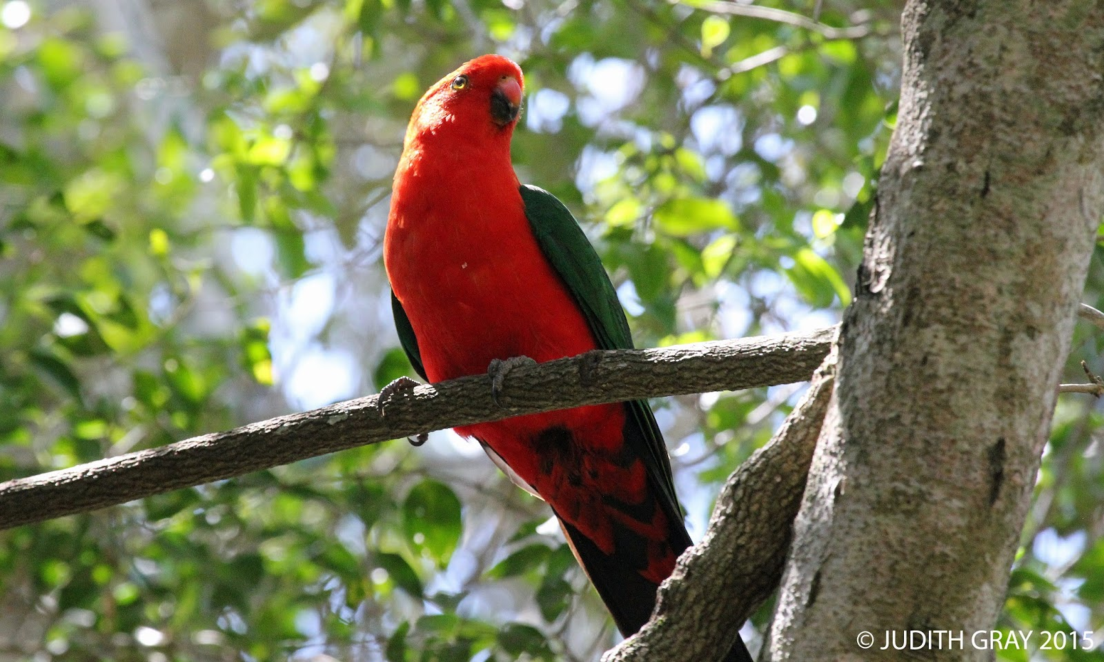 Aussie Backyard Bird Count Charmaine Crt Highfields