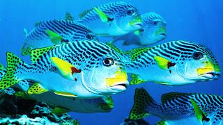 wallpaper binatang bawah laut