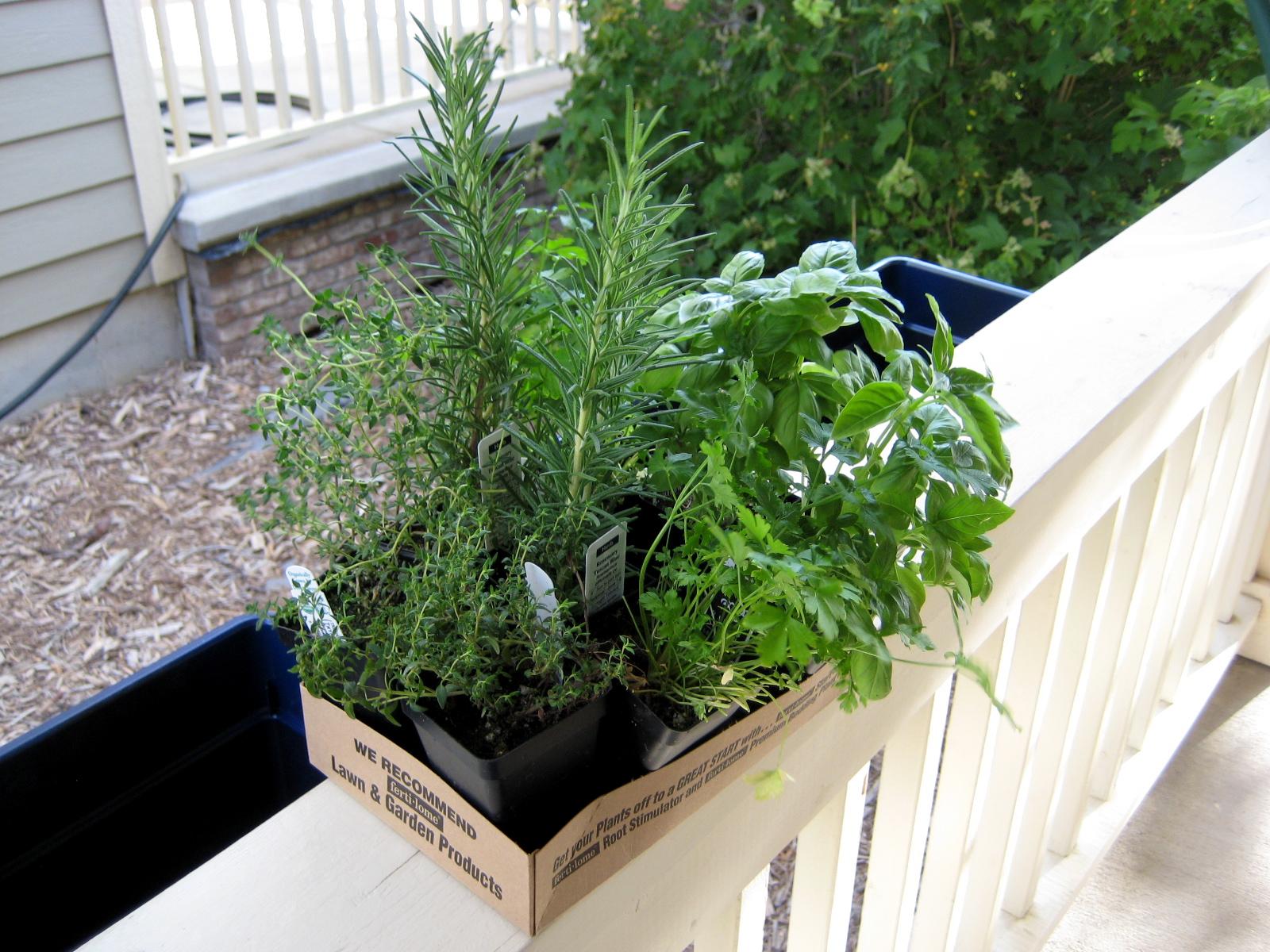 Handmade Homebody: Window Box Herb Garden