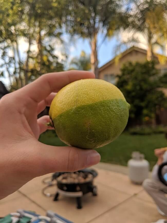 The Rarest Things We Have Ever Seen Captured In 17 Mind-Blowing Pictures - My friend's dad grew this perfect 'lime-on.'