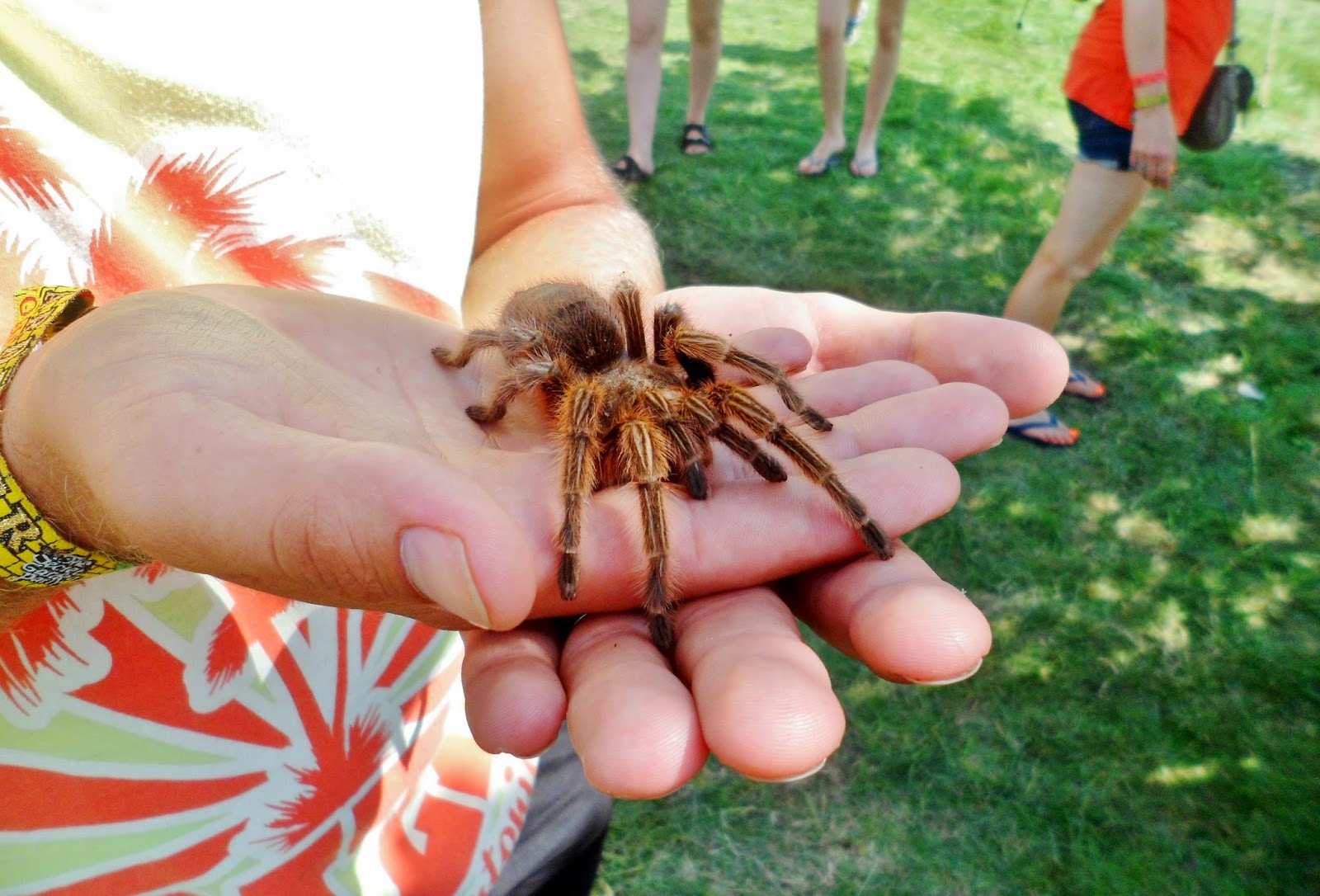 photo of tarantula at secret garden party 2014