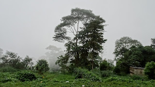 Rainforrest just outside Sao Tome